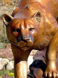 Bronze Cougar / Mountain Lion Sculptures